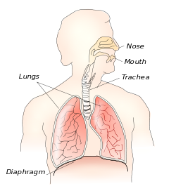 Diaphragmatic breathing for stress management